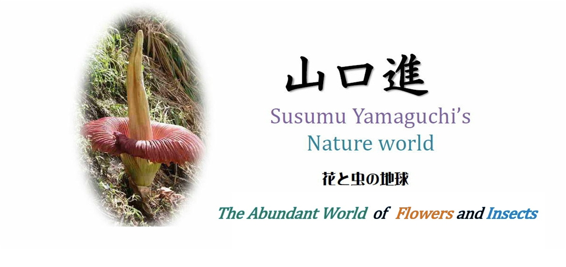 >山口進 花と虫の地球:The Abundant World of Flowers and Insectsトップ